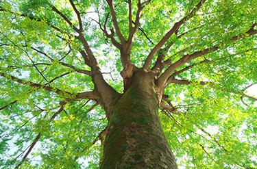 会社情報   日本通運